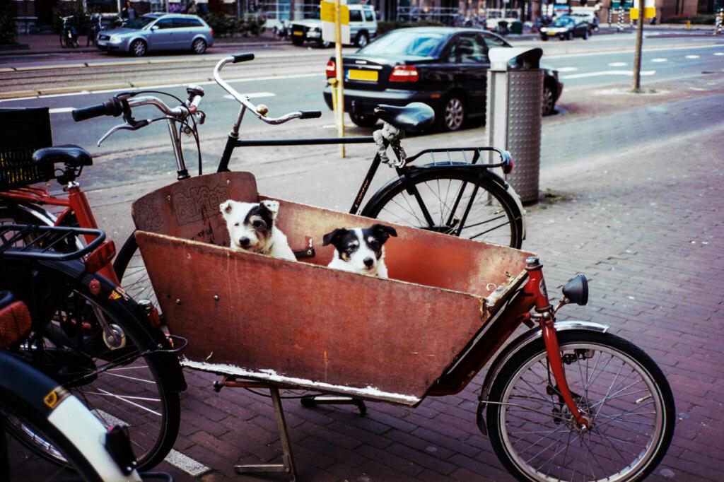 Amsterdam-color-5.jpg